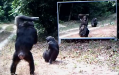 Das passiert, wenn wilde Tiere zum ersten Mal ihr Spiegelbild sehen